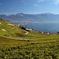 Szwajcaria / Lavaux - winnice, jak okiem sięgnąć