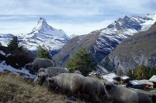 Matterhorn_155