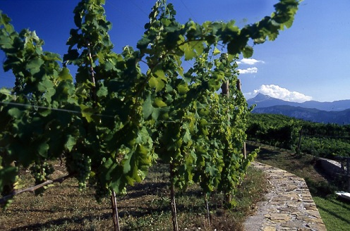 Sudtiroler-Wein_053p