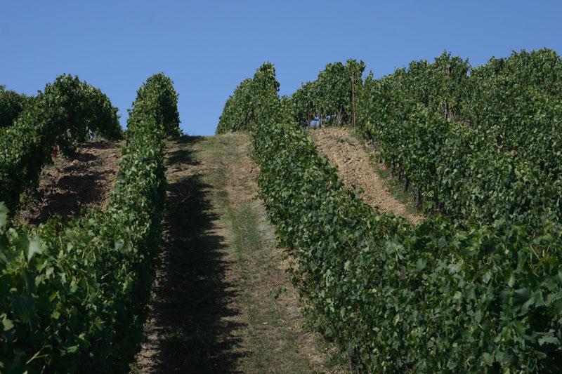 vin-santo-plus_0429