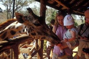 Giraffe_047p