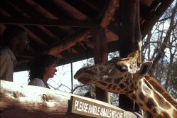 Giraffe_054p