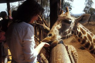 Giraffe_058p