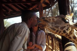 Giraffe_060p