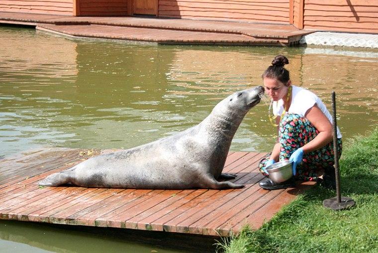 Zoo-safari w Borysewie, Dawid podczas karmienia, fot. Paweł Wroński