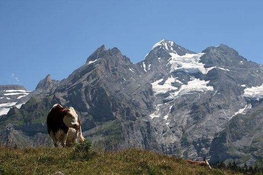 Blüemlisalp, po środku z lodowcem po prawej stronie, piramidalny Blüemlisalphorn (3661 m), fot. Paweł Wroński
