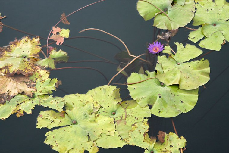 Gyógy-tó - jedno z dwóch największych termalnych jezior na świecie (Hévíz, Węgry), fot. Paweł Wroński