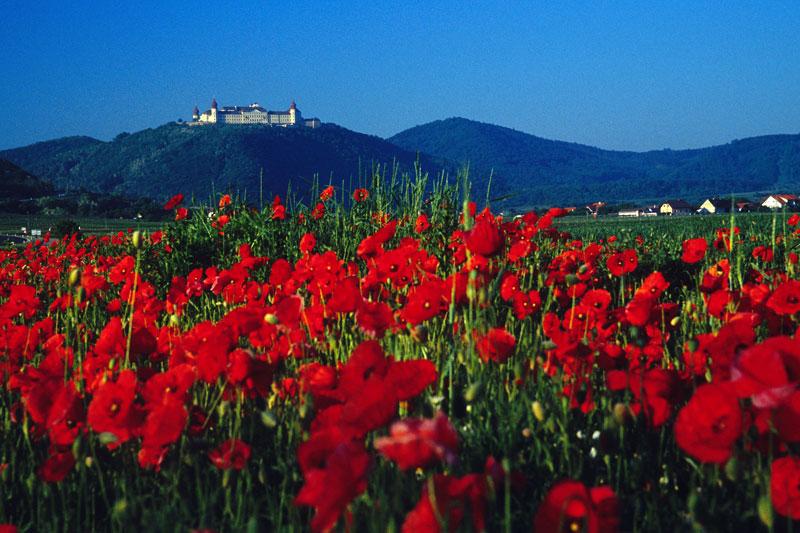 Göttweig. austriackie Monte Cassino, fot. Paweł Wroński