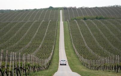 Jak okiem sięgnąć ciągną się winnice Belje, należące do Inajbogatszego chorwackiego biznesmena, Ivicy Todorića, fot. Paweł Wroński