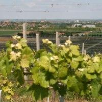 Chorwacja - winiarskie ABC