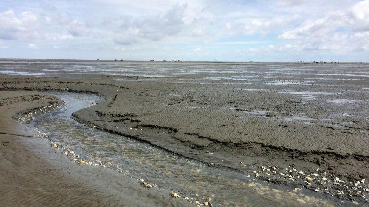 Rzeki w dnie Wattenmeer są zasłane skorupami różnych gatunków obumarłych małży, fot. Paweł Wroński