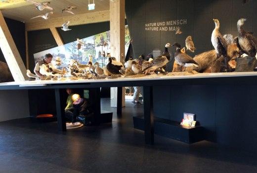 Ekspozycja w centrum prezentuje przyrodę Morza Wattowego, fot. Paweł Wroński