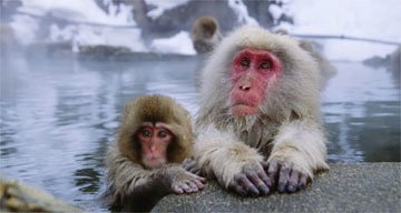 Monkey magic ... Japanese macaques in a hot spring in the Nagano area. Photograph: Corbis / Keren Su