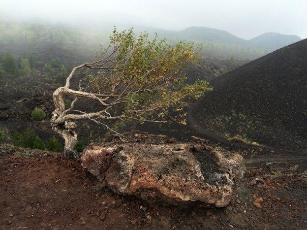 Sztandarowe formy są charakterystyczne dla drzew rosnących na wystawionych na działanie wiatru krawędziach krateru, fot. Paweł Wroński