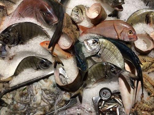Wybór ryb, fot. Paweł Wroński