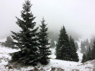 Górna granica lasu w pobliżu chaty, fot. Paweł Wroński