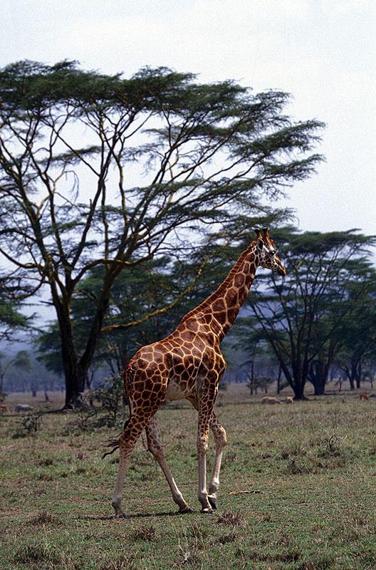 Lake Nakuru National Park, fot. Paweł Wroński