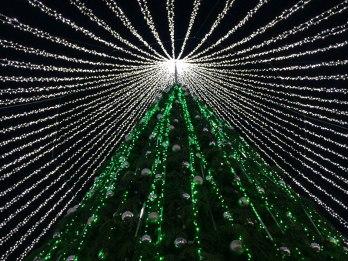 W adwencie, na Placu Katedralnym pojawia się największe wileńskie drzewko świąteczne, fot. Paweł Wroński
