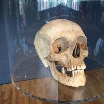 Galeria znalezionych kości, fot. Paweł Wroński