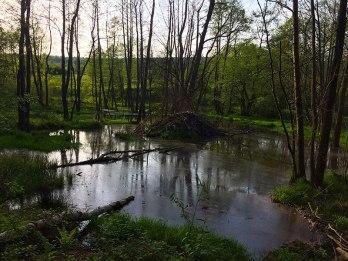 Zagospodarowany przez bobry fragment doliny źródłowego potoku Słupianki, fot. Paweł Wroński