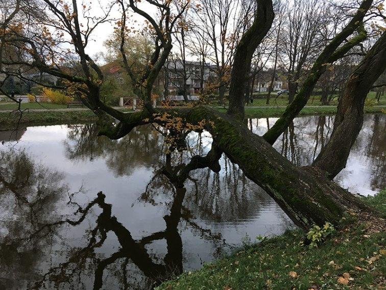 Park zamkowy w Szydłowcu, fot. Paweł Wroński