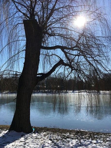 W promieniach wiosennego słońca szybko stopnieje lód na parkowym stawie, fot. Paweł Wroński
