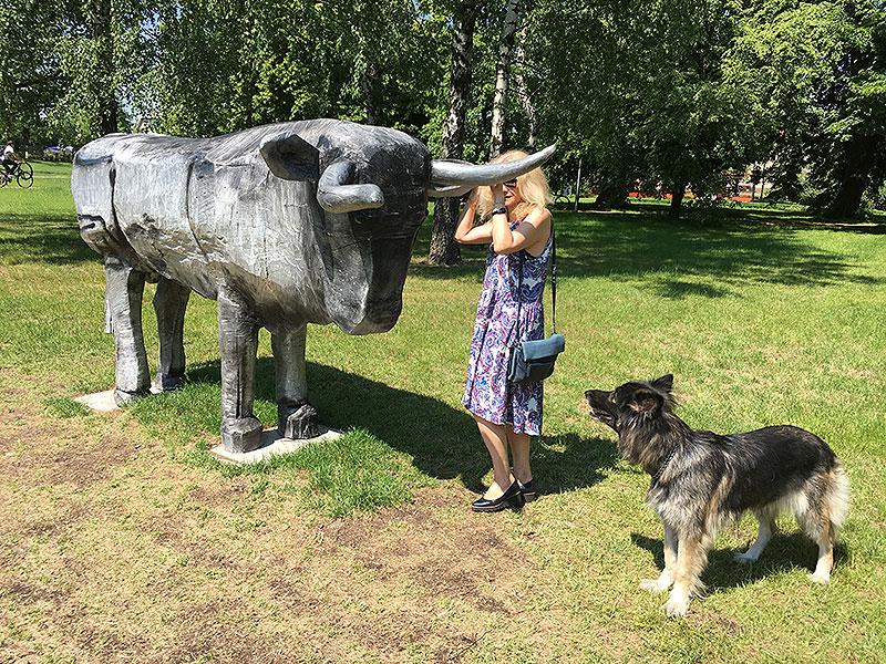 Tur. To się nazywa - złapać byka za rogi, fot. Paweł Wroński