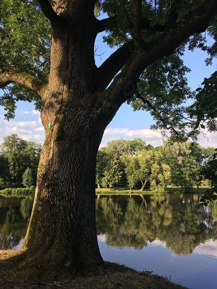 Park przypałacowy w Radziejowicach, fot. Paweł Wroński