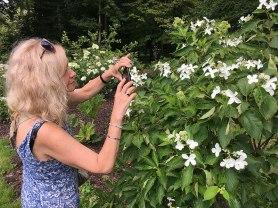 Rośliny kwiatowe - barwna ozdoba kórnickiego Arboretum, fot. Paweł Wroński