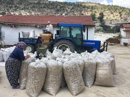 Przy uprawie maku pracują całe wielopokoleniowe rodziny, fot. Paweł Wroński