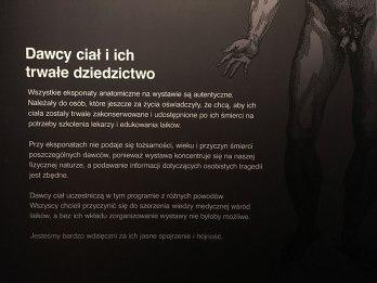 Body Worlds, fot. Paweł Wroński