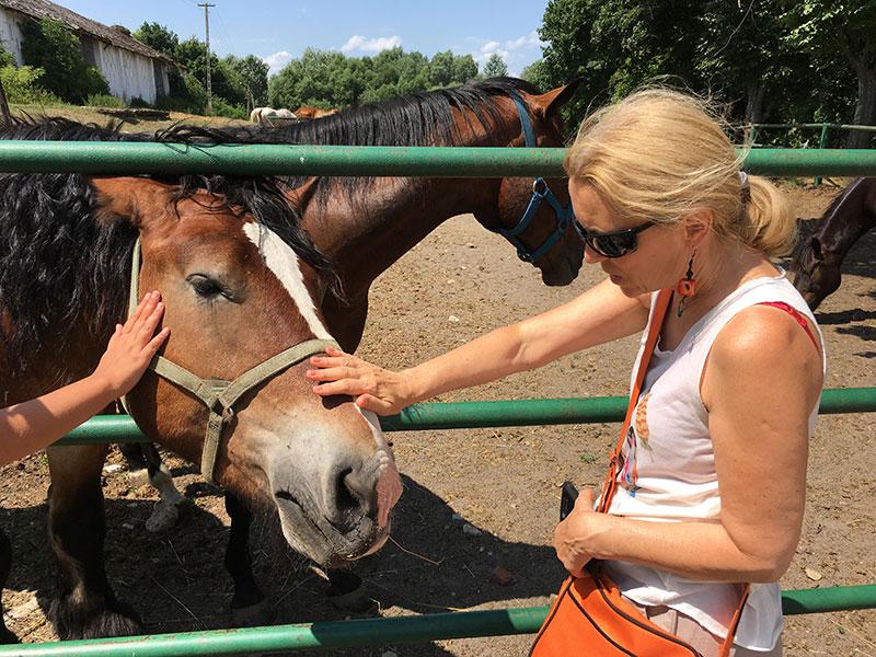 Stadnina koni w Kurozwękach, fot. Paweł Wroński