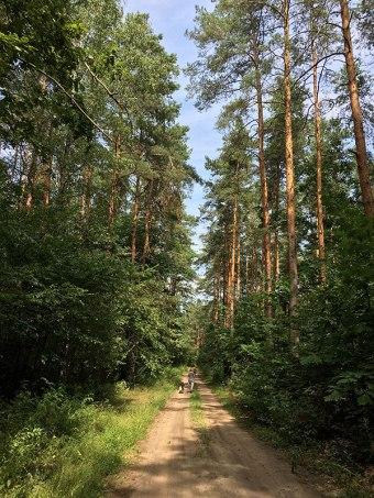 W rejonie Łosia, nad Jeziorką, fot. Paweł Wroński