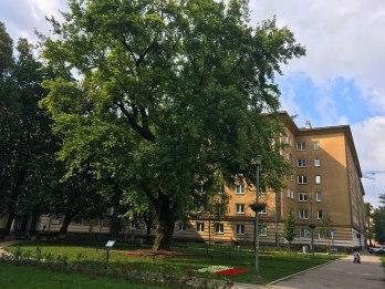 Skwer Bartoszewskiego w Warszawie na Mirowie (Wola), fot. Paweł Wroński
