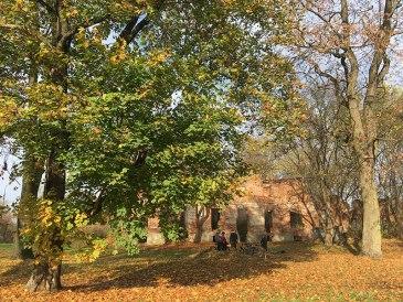 Ruiny pałacu Łubieńskich w Okuniewie, k. Sulejówka, fot. Paweł Wroński