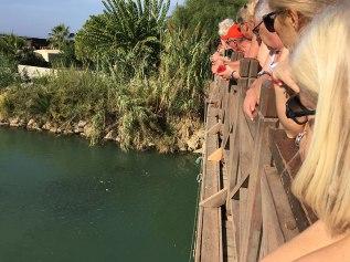 Przy moście roi się od ryb i budzących znacznie większe zaciekawienie gawiedzi, potężnych żółwi, fot. Paweł Wroński