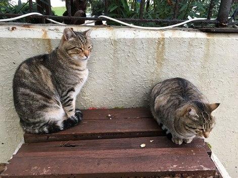 Koty czekają na swoją kolej, fot. Paweł Wroński