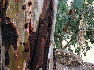 Brzegi rzeczki ocieniają drzewa i krzewy, fot. Paweł Wroński