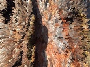 Kora sosny z zachowanym kolorem ale zmieniona w obraz 3D, fot. Paweł Wroński