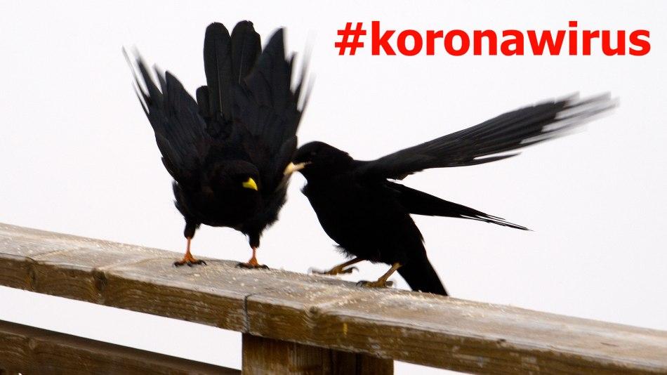 #koronawirus, Paweł Wroński, Alto Adige, włoski Tyrol,