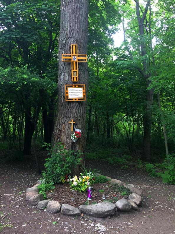 Pamiątkowa tablica na pniu starej topoli przy południowym skraju głównego duktu, fot. Paweł Wroński