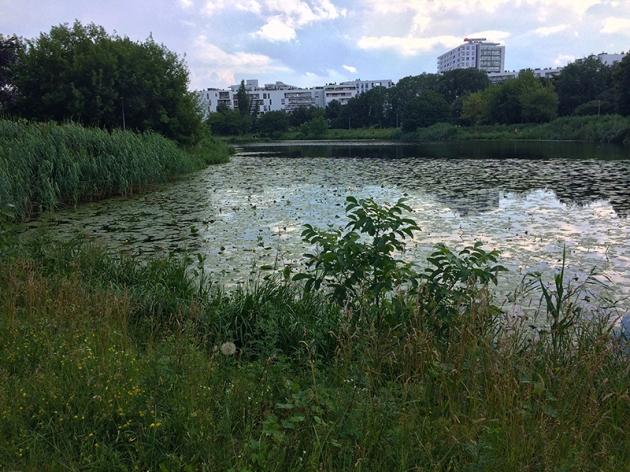 Jezioro Gocławskie przed burzą, fot. Paweł Wroński