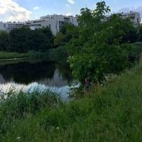 JezioroGocławskie, enklawadzikiejprzyrody