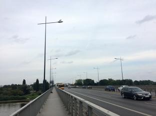Mewy upodobały sobie latarnie na moście, fot. Paweł Wroński