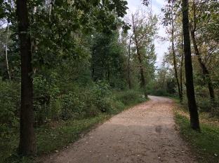 Ścieżka spacerowa w łęgowych zaroślach, fot. Paweł Wroński