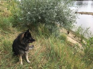 Psie marzenie o wodzie, fot. Paweł Wroński
