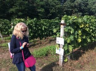 Zwiedzanie ułatwiają QR-kody, które po wczytaniu odsyłają na strony Winnicy Dwórzno, fot. Paweł Wroński