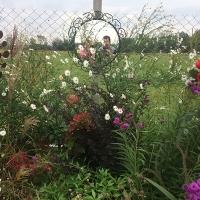 Ogrodowisko-do-sieci_7561