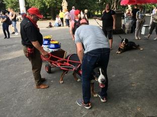 Po paradzie w ogrodzie saskim było nadzwyczaj dużo psów ras szwajcarskich, które zjechały z całej Polski, fot. Paweł Wroński