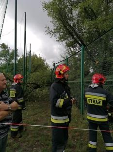 Interwencja straży pożarnej w Parku Szypowskiego - strażacy pocięli pień na klocki i zostawili do usunięcia